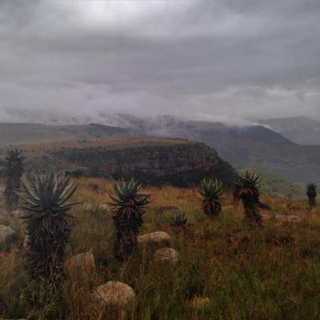 Boven Villa: Waterval Boven surrounding valleys has beautiful vegetation like these Aloes.