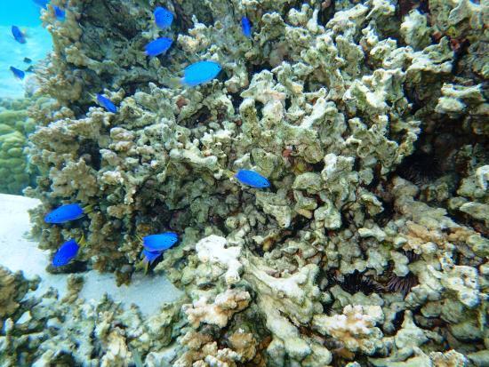 Tiahura Beach: Great snorkeling between motus