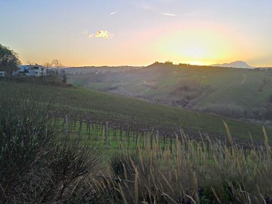 Campoletizia Azienda Agrituristica : Panorama dalle camere verso i monti...