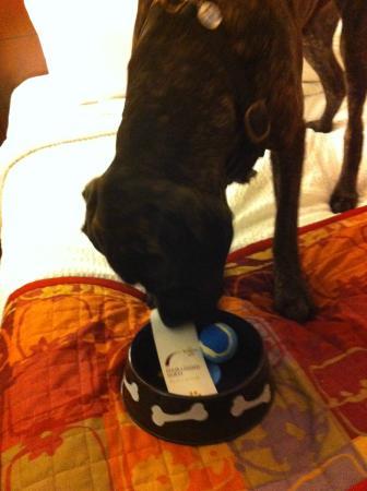 Residence Inn by Marriott Amelia Island: Doggy Welcome bowl