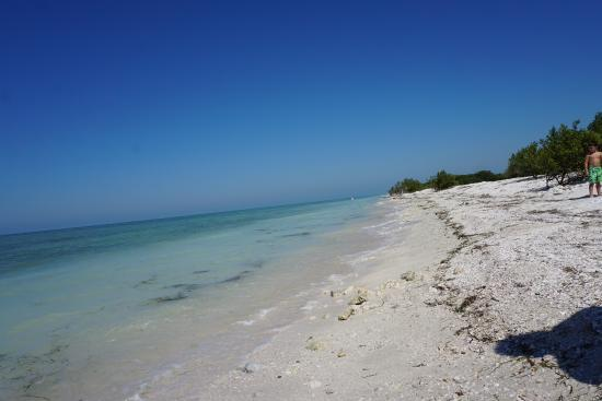 Honeymoon Island State Park The Far North Beach