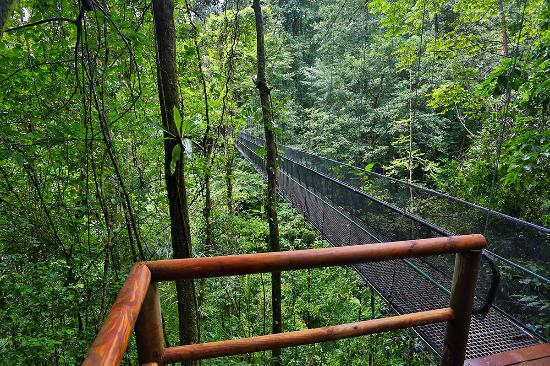 El Remanso Lodge: El Remanso suspension bridge