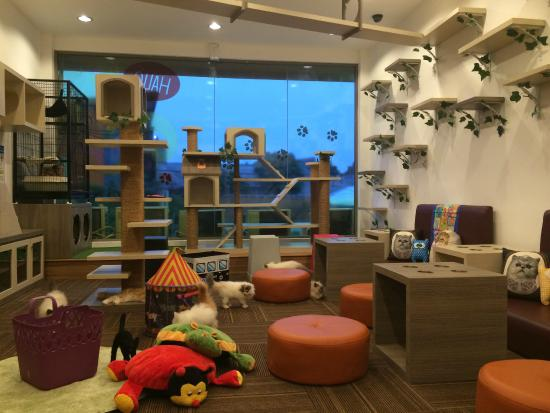 attraction review reviews cutie cats cafe jakarta java