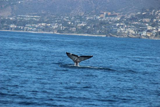 Dana Point, Californien: woof