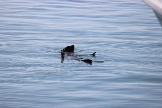 Dana Point, Californien: meow