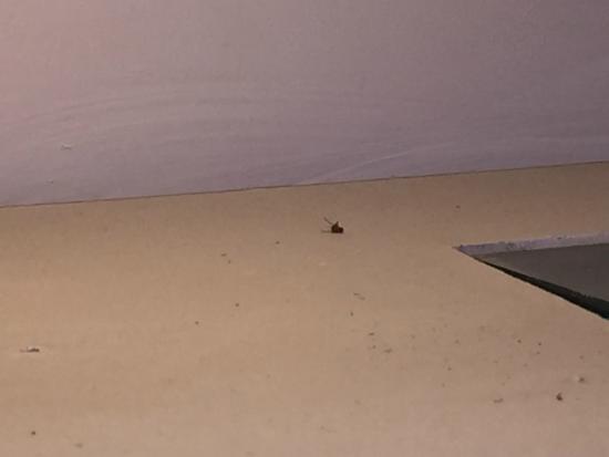 Nice dead fly