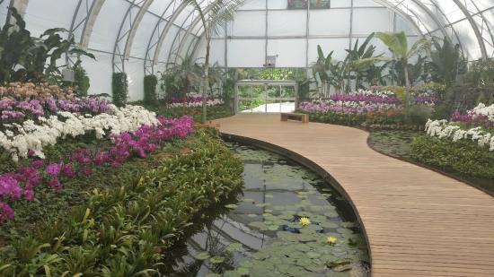 Orquideas picture of jardines de mexico jojutla for Jardines pequenos mexicanos