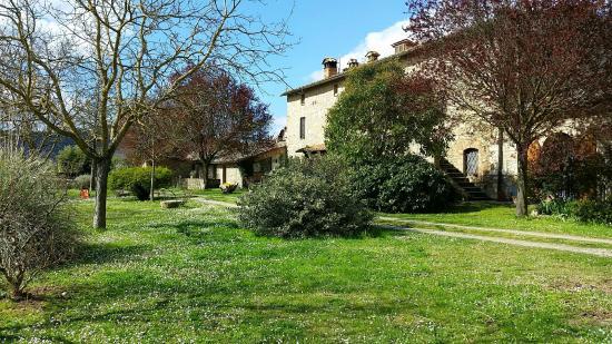 Palazzo a Merse B&B: giardino