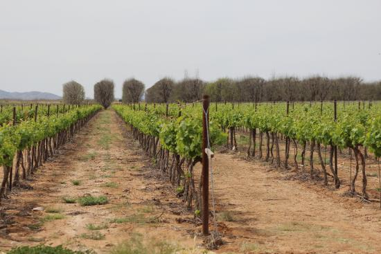 Fort Bowie Wineyards