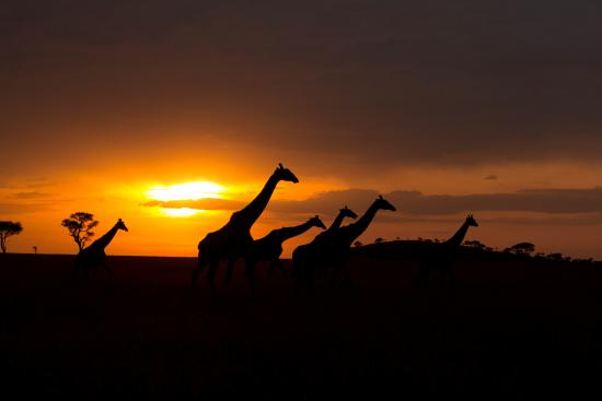 Singita Sasakwa Lodge : evening on the serengeti