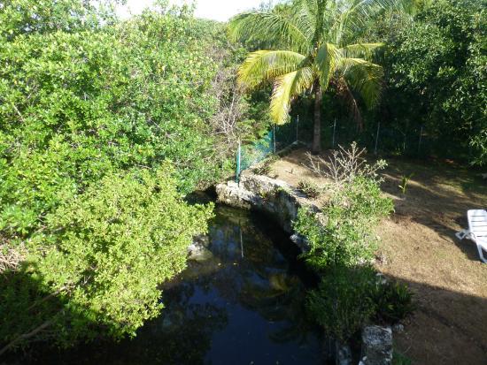Villas Picalu B&B Boutique: Cenote im Garten