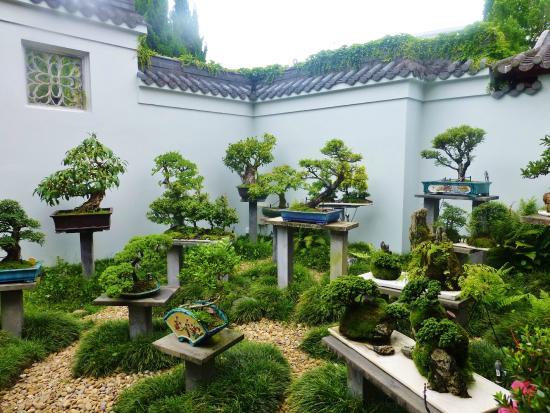Bonsai - Picture of Chinese Garden of Friendship, Sydney - TripAdvisor