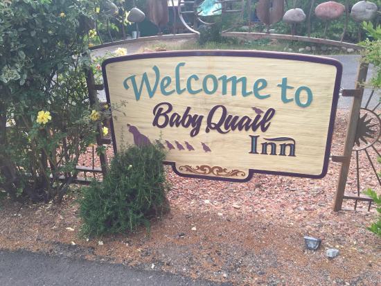Baby Quail Inn: Baby Quail.