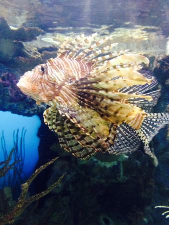 One cool looking fish picture of shark reef las vegas for Cool saltwater fish