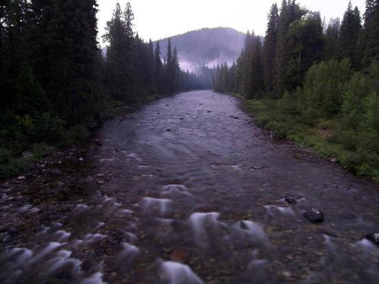 Powell, ID : Colt Killed Creek