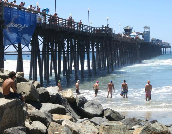 Swimmers lined up alongside the pier picture of for Oceanside fish report