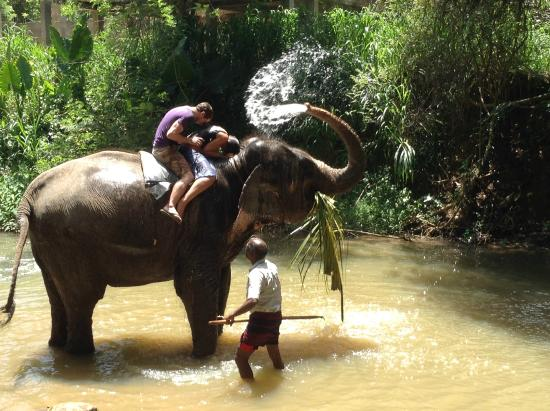 Bentota, ศรีลังกา: Visiting elephants in their habitat
