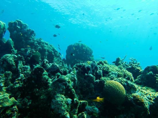 Кабарет, Доминикана: Dive at Sosua