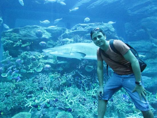 Dubai Aquarium & Underwater Zoo: Dubai Aquarium
