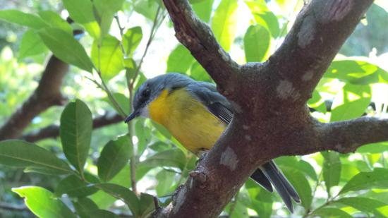 O'Reilly s Green Mountain Tour: this is one of the beautiful birds in the National Park