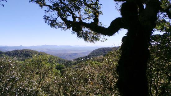 O'Reilly s Green Mountain Tour: this photo was taken from the tree top walk up 24ft above the standard walk