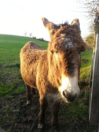 Valleylodge Farm Hostel: kernel the donkey