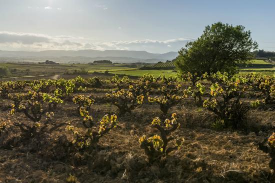 Gramona: Our vineyards / Nuestros viñedos