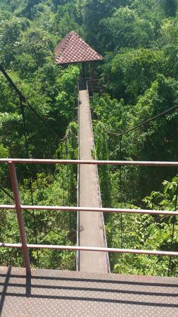 Peninsular Botanic Garden - Thung Khai: Canopy walk