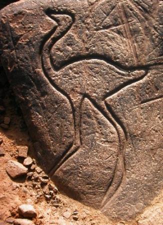 Tazzarine, Marokko: Ostrich