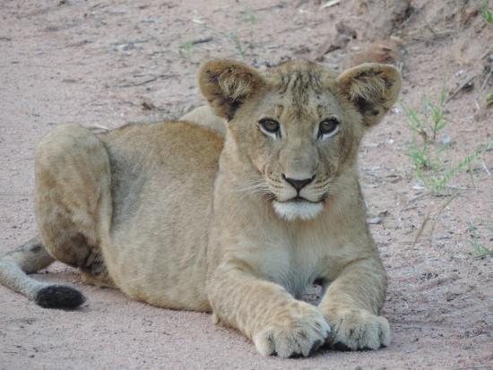 Kwa Madwala Private Game Reserve: Madwala babies