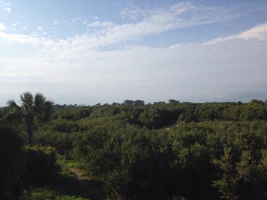 Natures Landing Condominium: View from our condo