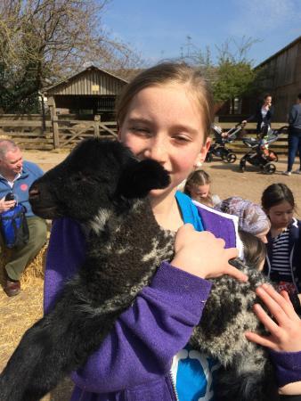 Stonehurst Family Farm and Museum: Holding a lamb