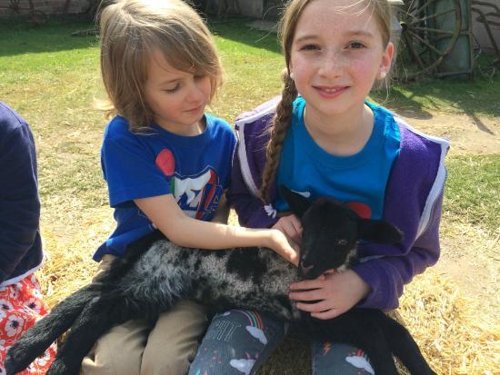 Stonehurst Family Farm and Museum: Holding a baby lamb