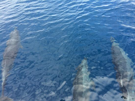Dana Point, Californien: Dolphins right underneath us