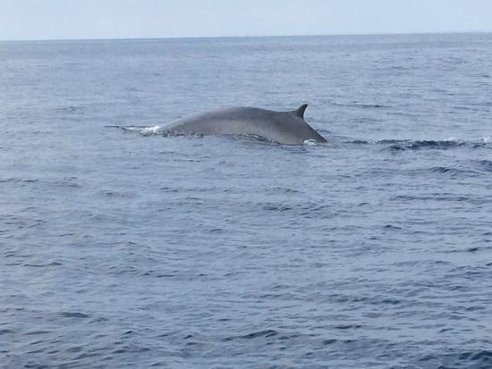 Dana Point, Californien: Fin whale that we saw several times