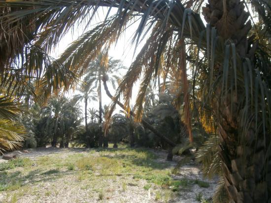 Ruta del Palmeral - Billede af Palm Groves (Palmeral) of Elche, Elche - TripA...
