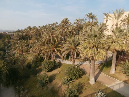 Parque Municipal - Foto di Palm Groves (Palmeral) of Elche, Elche - TripAdvisor