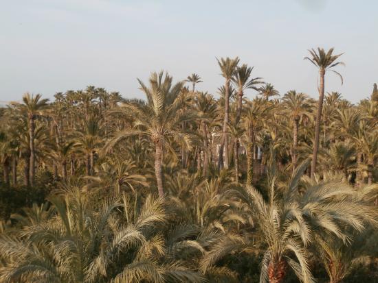 Rio Vinalopò - Foto de Palm Groves (Palmeral) of Elche, Elche - TripAdvisor
