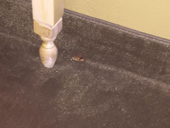 Golden Palms Inn & Suites: Dead cockroach