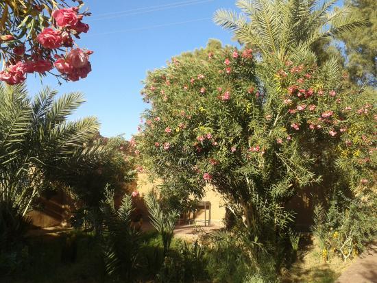 Hamada Du Draa: jardin