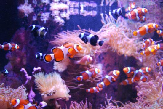 Belle aquarium picture of mystic aquarium mystic for Go fish mystic
