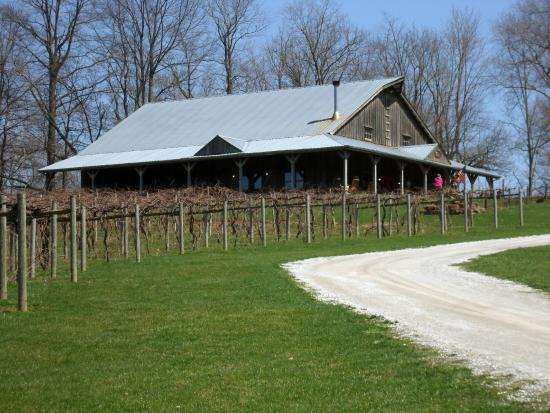IL-GREENUP-CAMEO-VINEYARD-1