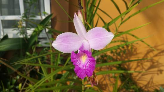 Coconut Lodge: Orchids in bloom, even in April