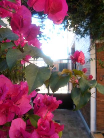 La Demorada: Jardín