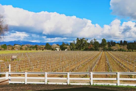 Lincourt Vineyards: Vineyard