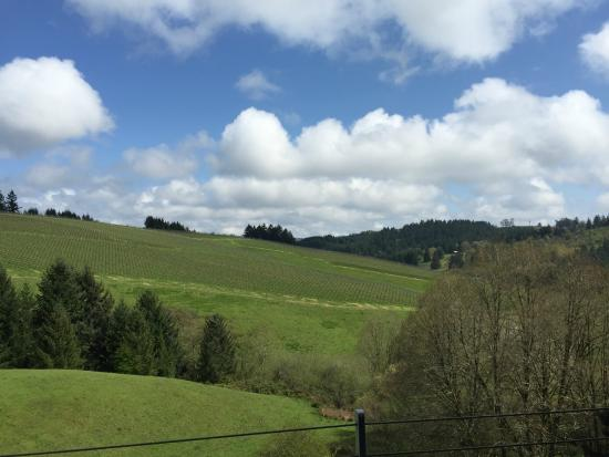 WillaKenzie Estate : View from the tasting room