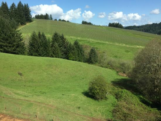 WillaKenzie Estate : Rolling hills of green