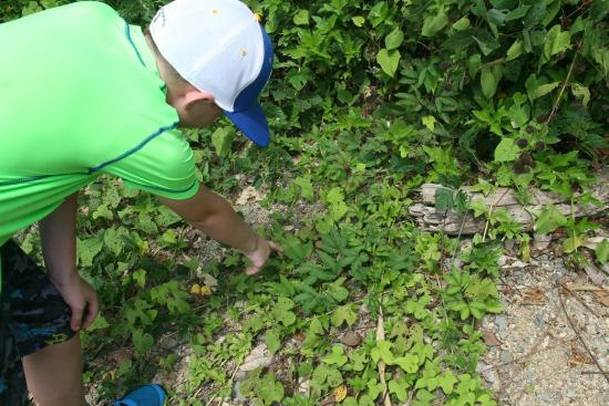 "Quepoa Expeditions: touching the ""sleepy fern"""