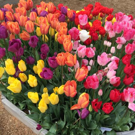 Wooden Shoe Tulip Farm : Pretty planters