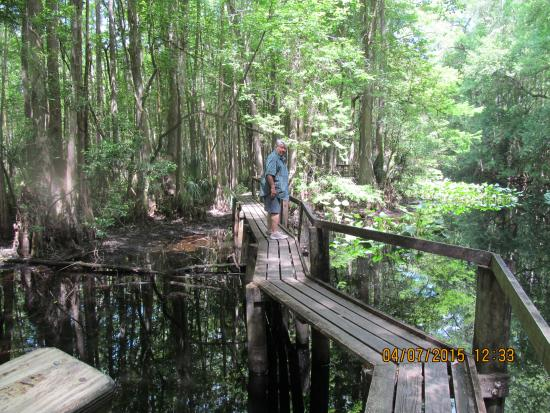 Sebring, Флорида: Walkway thru the creek area